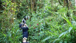 png adventure tour, trekking papua new guinea, mount hagen trek